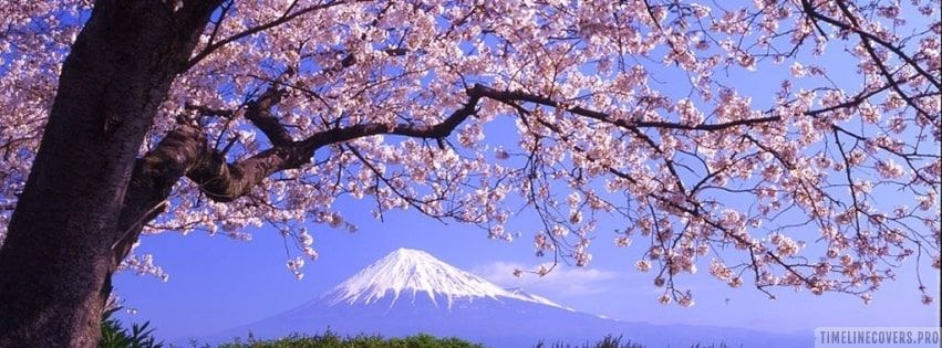 Sakura Tree Facebook Cover Sakura Tree Facebook Cover Photos Facebook Cover