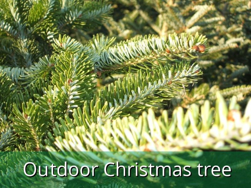 Make your decorations stand out that little bit more this year with an outdoors Christmas tree