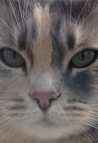 My cat Sandy. Shannon, Georgetown, KY - 2/15/2015