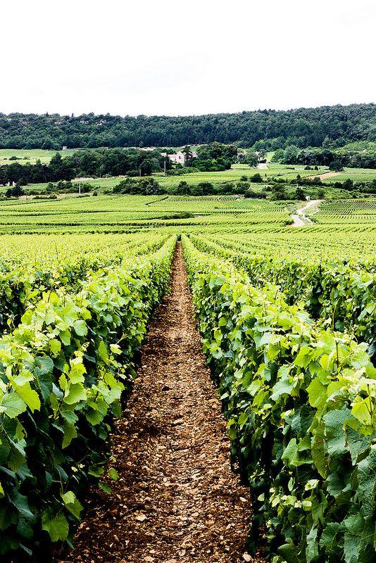 Untitled Nel 2019 Vigneto Borgogna Francia E Francia