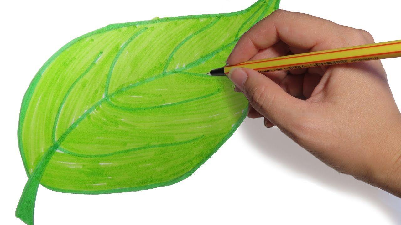 COMO DIBUJAR HOJAS DE ARBOLES PASO A PASO: Dibujos faciles para niños a  color - YouTube en 2020 | Como dibujar una hoja, Dibujos faciles para  niños, Como dibujar arboles