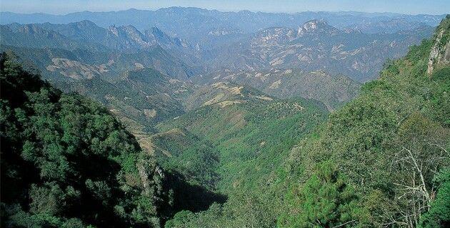 Region de las quebradas de Durango encuentras en su fauna pericos gavilanes halcones,buhos y lechuzas y otros mas.