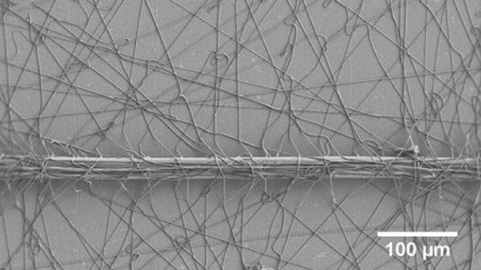 The adhesive fibers in one of the man-made attachment discs, holding down a nylon thread
