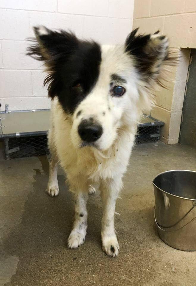 Pin By Misti Kane On Adopt Rescue Urgent Animal Shelter