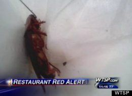 Roach-Infested McDonald's Exposed After Trying To Block