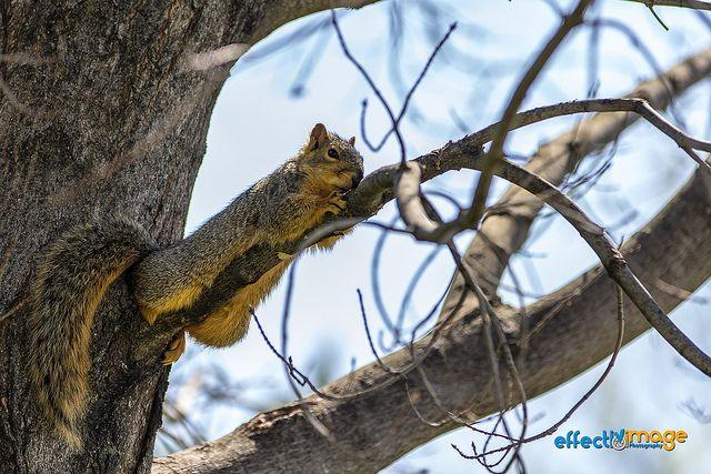 Camo Ninja Squirrel, via Flickr.