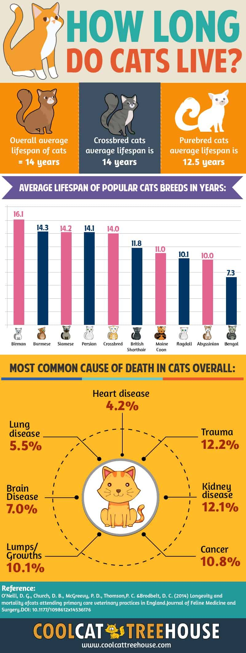 How Long Do Cats Live? Facts About Cat Lifetime Cool