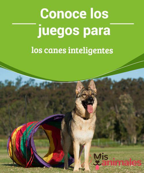 Conoce Los Juegos Para Los Canes Inteligentes My Animals Entrenamiento Perros Juegos Perros Actividades Para Perro