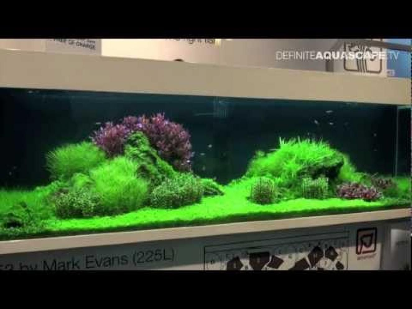 Planted freshwater aquarium setup for Freshwater fish tank setup