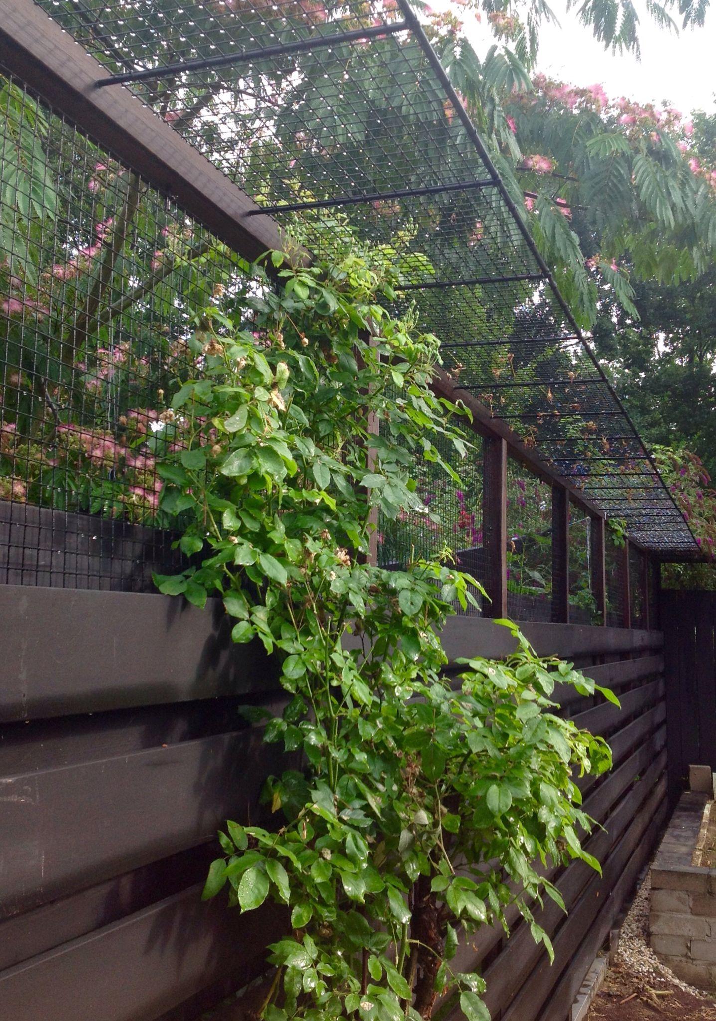 Cat proof fence outdoor cat enclosure cat proofing