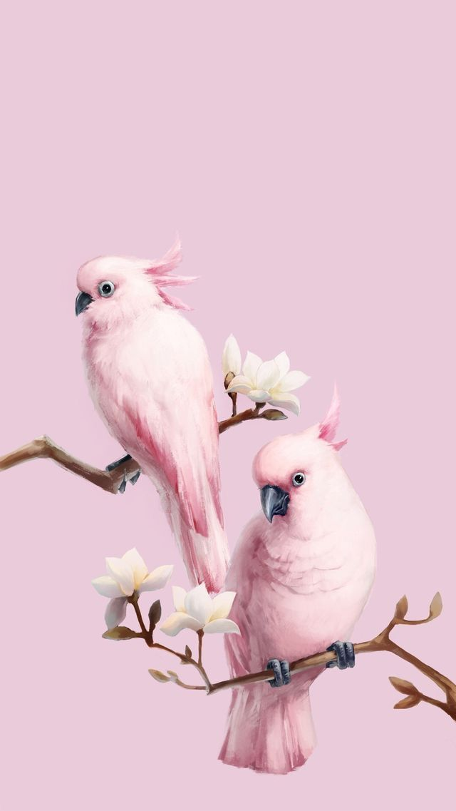 Pin By Jessie Sutherland On Color Bird Wallpaper Animal Wallpaper Parrot Wallpaper