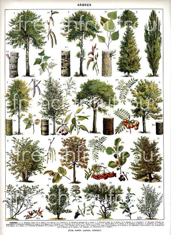 Vintage french illustration forest trees digital d