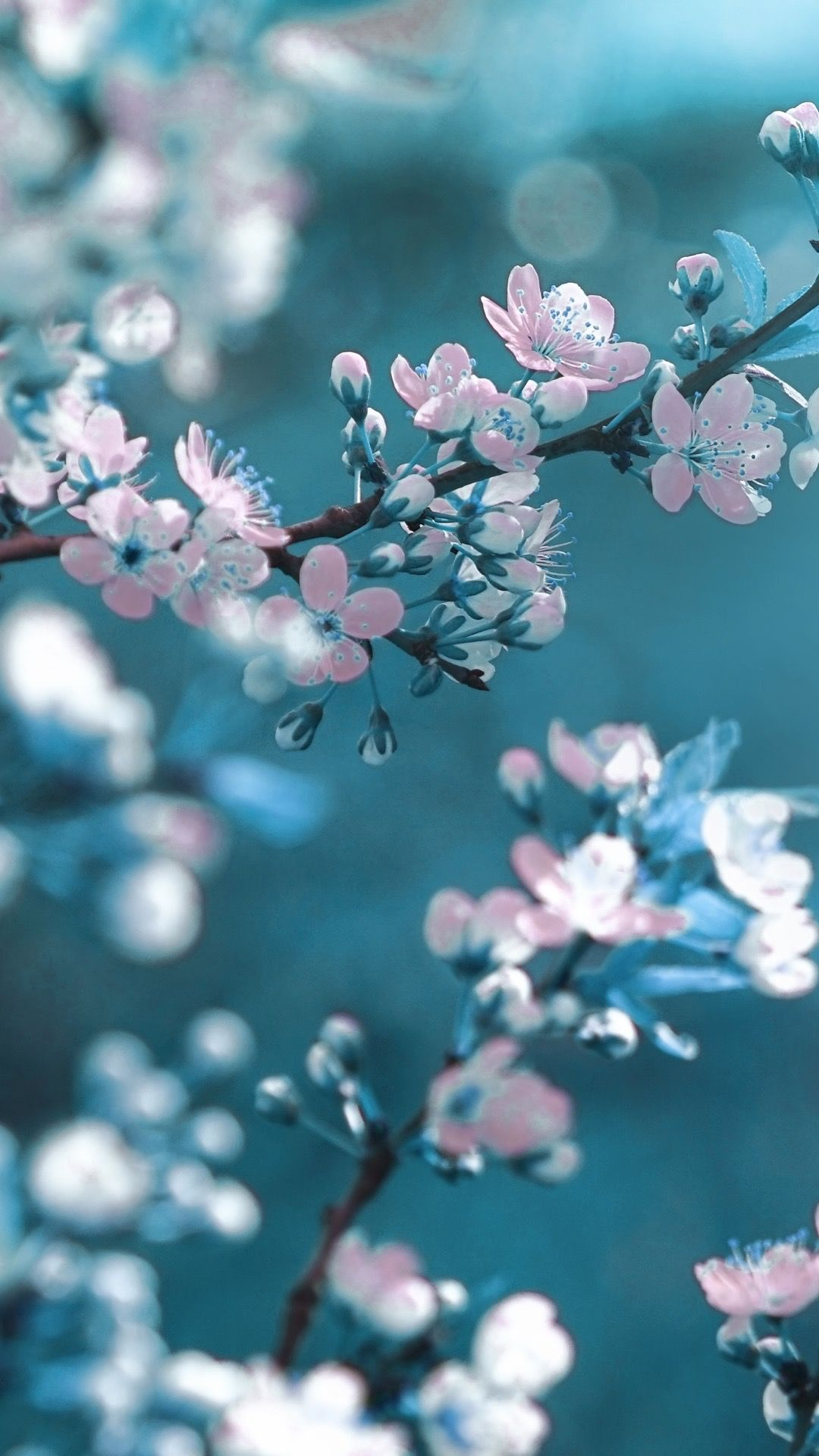Pin By Pamela On Iwallpapers Spring Flowers Wallpaper Flower Background Wallpaper Floral Wallpaper Iphone