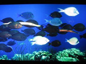 Fleet of fish in a huge tank