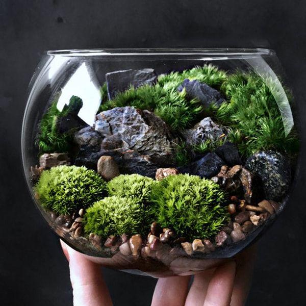 Bio Bowl Forest World Terrarium Terraria Bowls And Plants