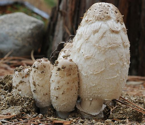 """In Defense of the Ninth Layer (of the Forest Garden)  """"Most are asking why add Fungus but not bacteria, or worms, protozoa, etc. for that matter? Why not just call it the Underground Life Layer or Soil Layer or something else that is more inclusive?  Well, here is my response."""""""