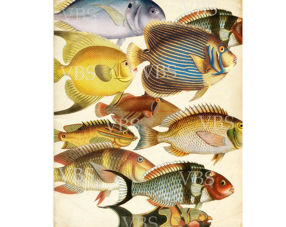 Vintage Fish Art Print - Les Poissons Natural History Collage Wall ...