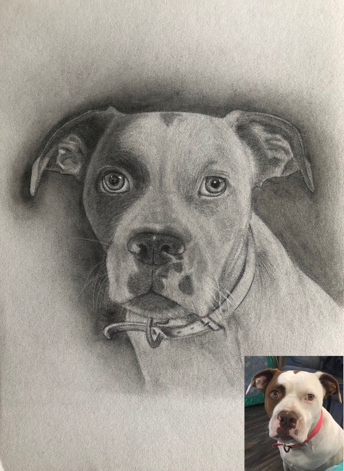 499e252467fa Excited to share this item from my #etsy shop: Pet portrait pencil drawing  original, custom order, from photo, dog cat animal