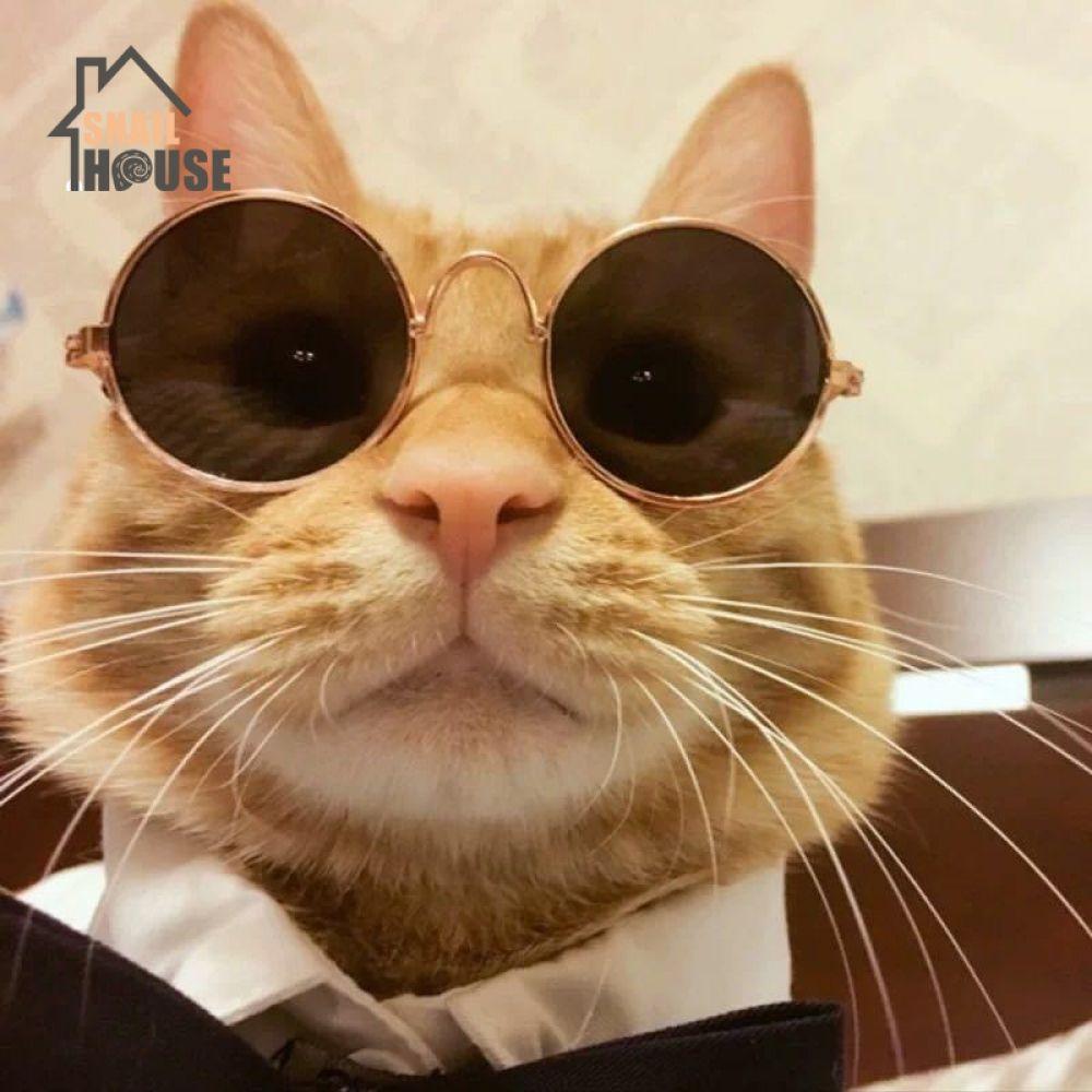 Snailhouse Dress Up Cool Glasses Cat Pet Products Eye Wear Sunglasses Small Dog Kitten Pet Photos In 2020 Pet Photo Prop Pets Photo Prop Accessories