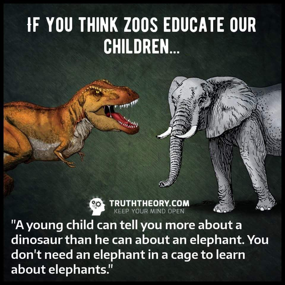 Exactly Stop Supporting These Prisons The Only Animals In A Zoo Should Be Animals Who Ve Been Injured And Cannot Surviv Vegan Animals Elephant Vegan Quotes