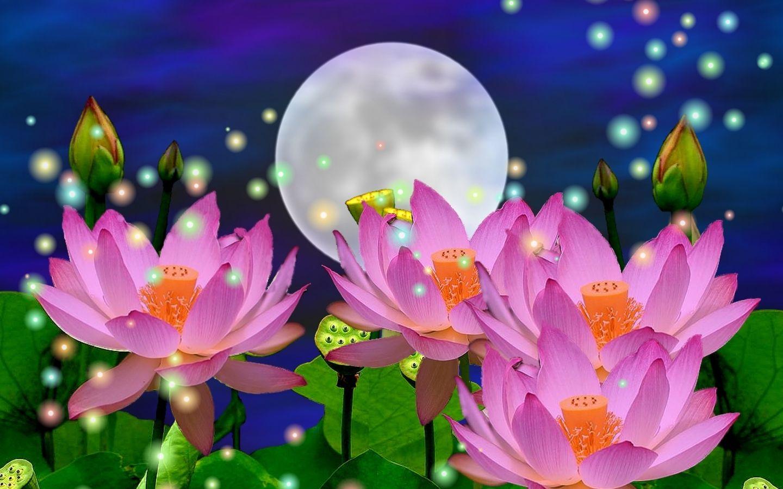 Fondos De Pantalla Hd Flores: Nature Wallpaper - Flores, Rosybrown