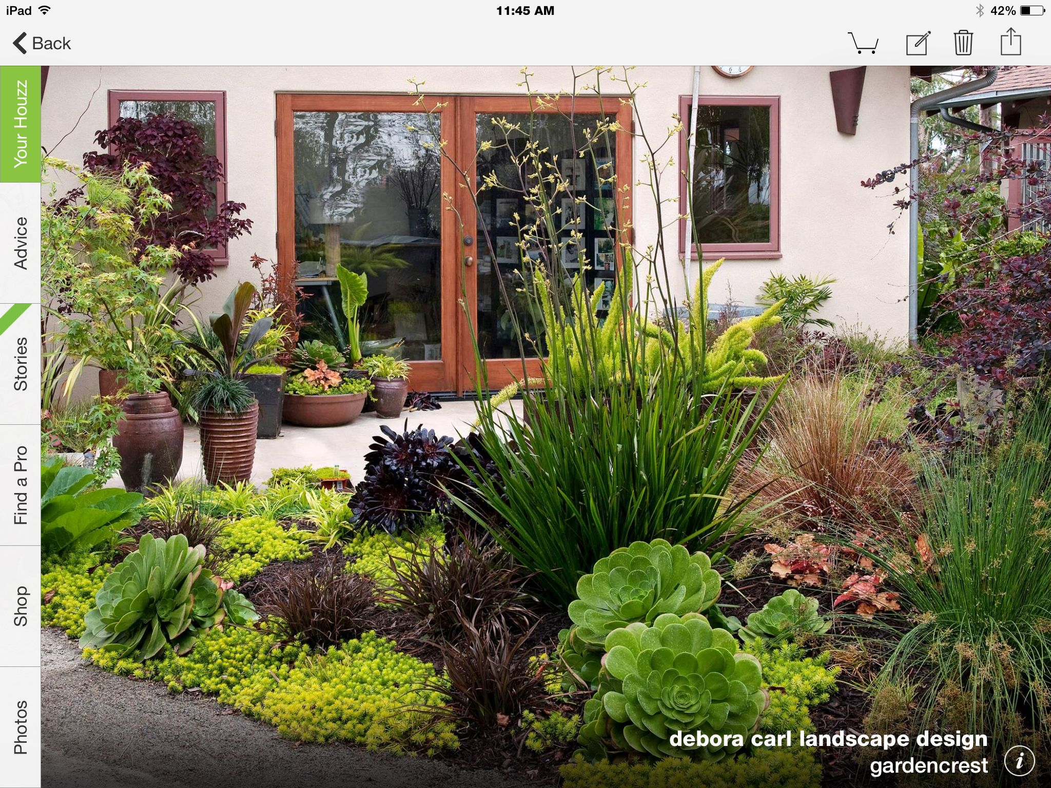 Drought tolerant landscape succulents mediterranean for Home garden design houzz