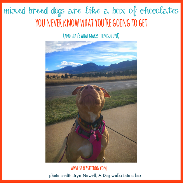 Mixed breed dogs are often overlooked in shelters. It's time to share the joys of adopting a mixed breed dog! Animal Rescue | Animal Shelters | Mixed Breed Dogs | Dog Lovers | Adopt, Don't Shop |