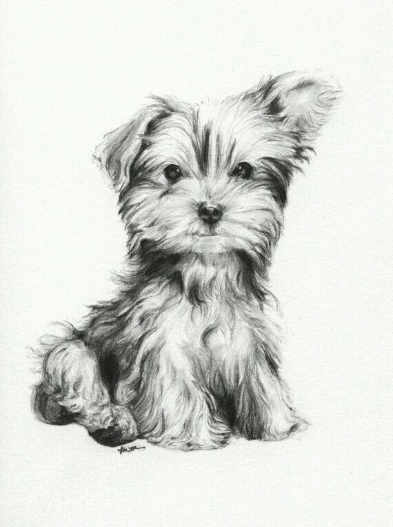 Image Result For Drawing Ideas Things To Draw Drawings Pet