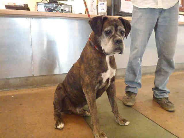 East Valley, Ca. Animal Care and Control Center at (888 ...