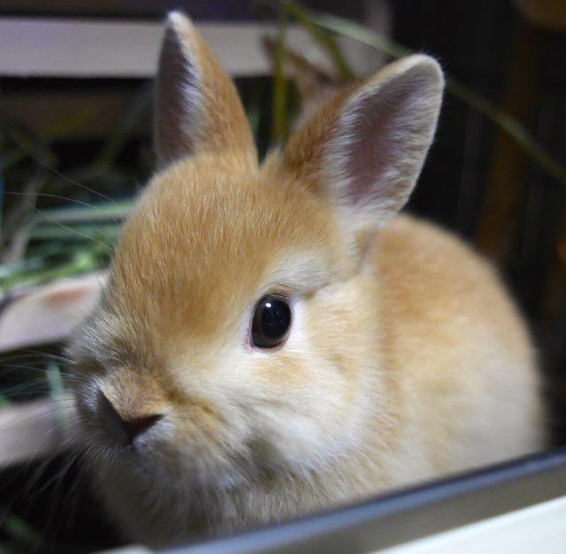 59日目 名前はココです すそ洗い 子ウサギ うさぎ かわいいウサギ