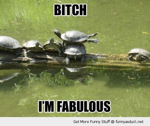 ddfb353ad8a0817a0626d2cbebb02351 fabulous turtle funny quotes pinterest turtle, hilarious