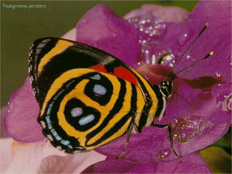 Google Image Result for http://www.valdosta.edu/~llwindha/insect3.jpg