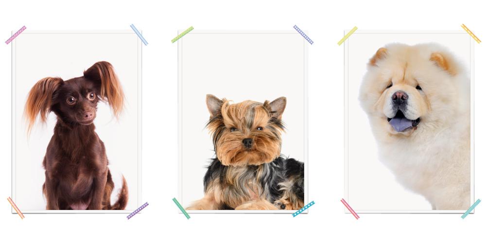Hund Braun Hund Schwarz Braun Hund Weiss Hunde Poster Kinderzimmer Poster Kinderzimmer Hunde Haustiere
