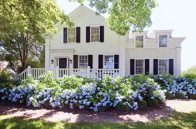white house, blue hydrangas
