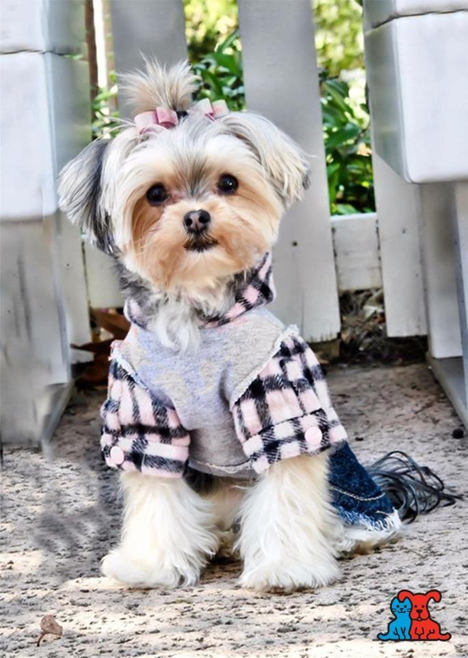 Petco Best Dressed Contest Winner Cute Dogs Cute Animals