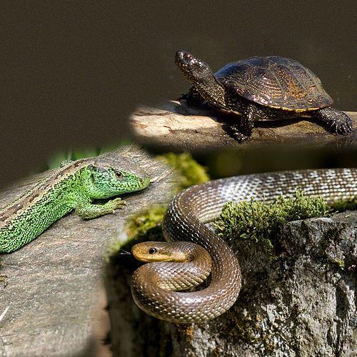 animales que reptan - Buscar con Google | barcos, faros y puentes ...