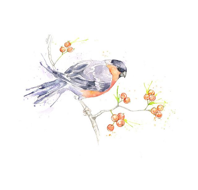 British Birds: Bullfinch by Amy Holliday