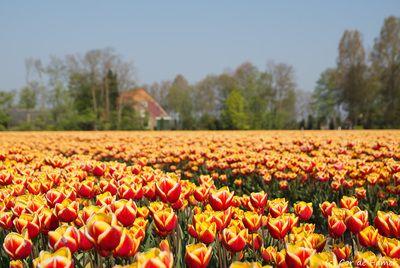 noordoostpolder netherlands | Landscapes of the Netherlands