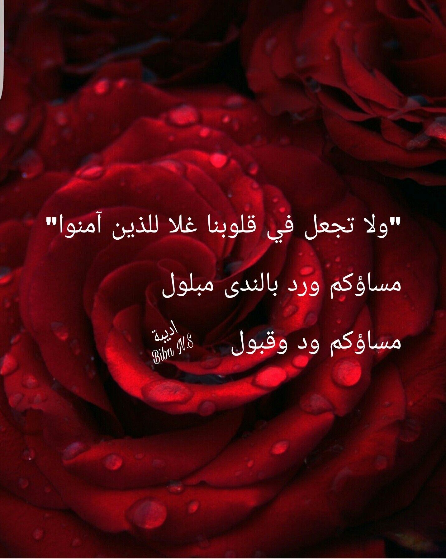 مساء ورد احمر جوري Flowers Plants Rose