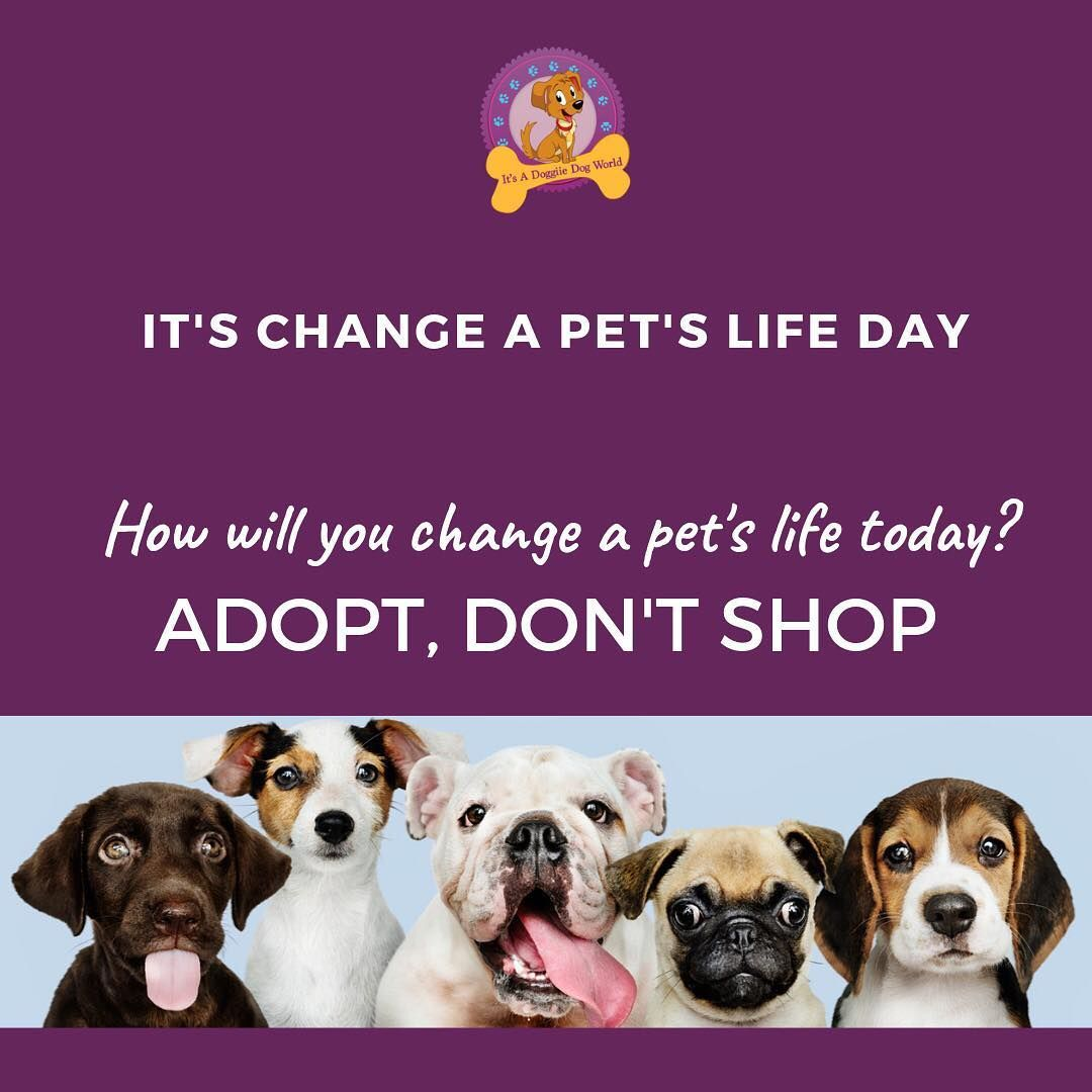 Changeapetslifeday Do Your Bit Dont Shop Adopt They Might Be Here Only For A Part Of Your Life But For Them You Are Their W Pet Care Pet Wellness Pet Life