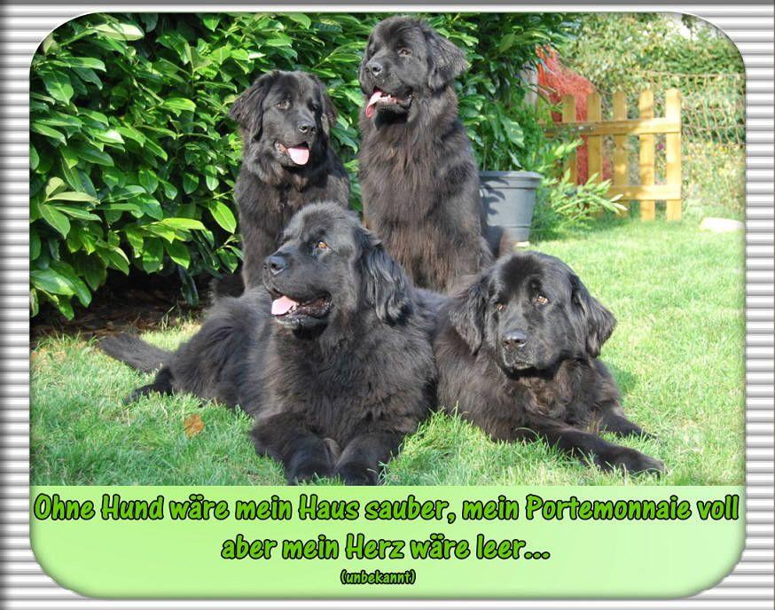 Neufundlander Vom Oberen Perftal Hundezitate Hund Zitat Hunde Neufundlander