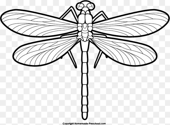 Dragonfly Drawing Png Dragonfly Outline Clipart Clip Art Library 577 425 Png Download Free Transpare Dragonfly Drawing Dragonfly Clipart Clip Art Library