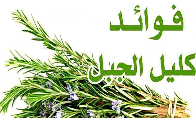 اكليل الجبل Herbs
