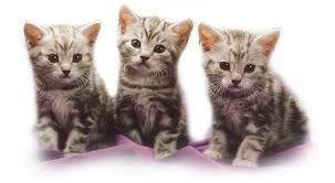 Kuvahaun tulos haulle kissa