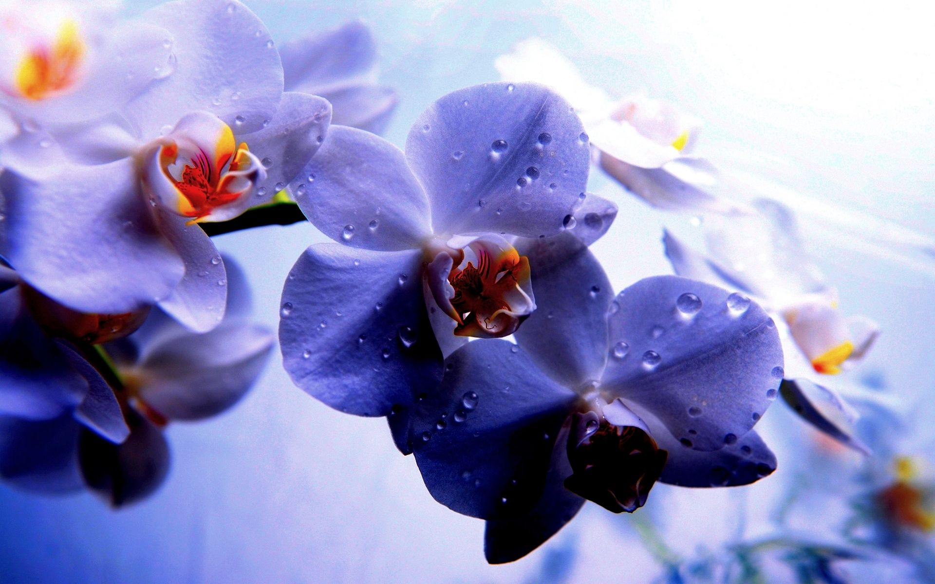 lovely orchid wallpaper 203 | Desktop Wallpaper in 2019 | Pinterest | Orchid wallpaper, Orchids ...