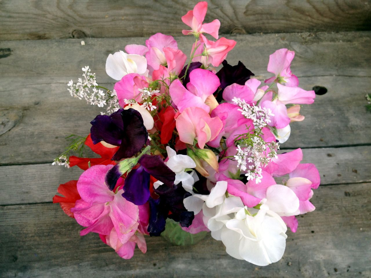 A School Garden Bouquet Of Cilantro And Sweet Pea Flowers Gorgeous From Www Ediblegardensla