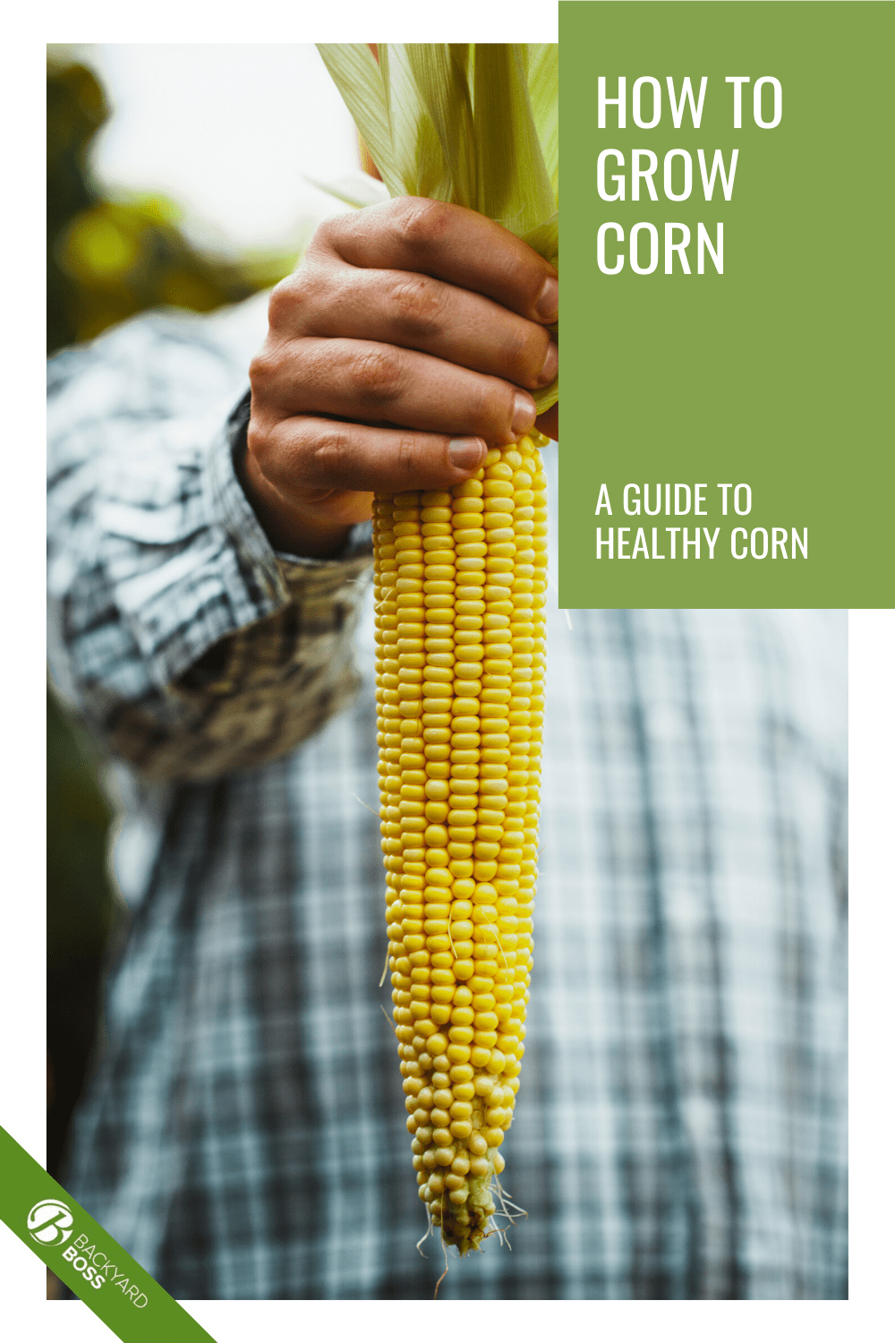 How to Plant, Grow and Harvest Corn at Home - Backyard ...