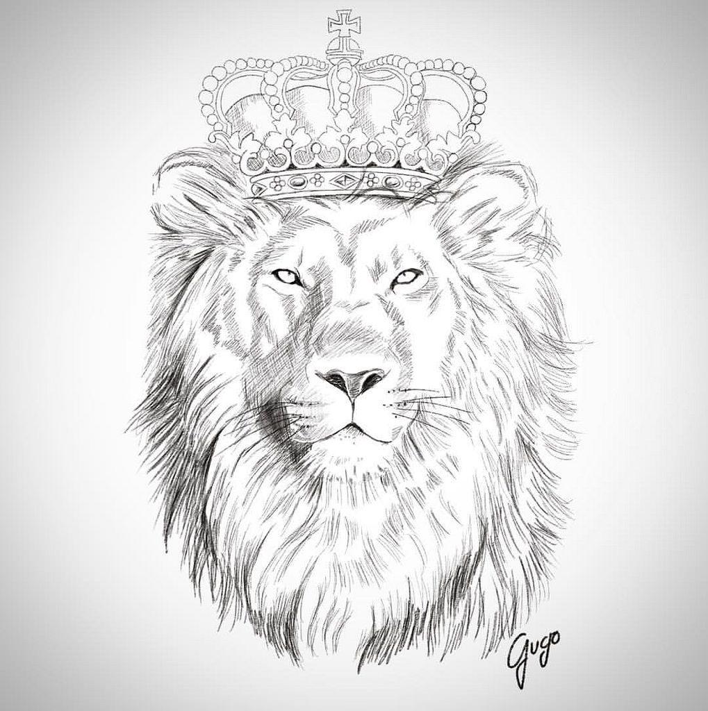 esbo231o sketch lion le227o draw desenho gugo guarulhos