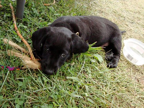 An Adorable Dachshund Lab Mix Dachshund Mix Dachshund Mix