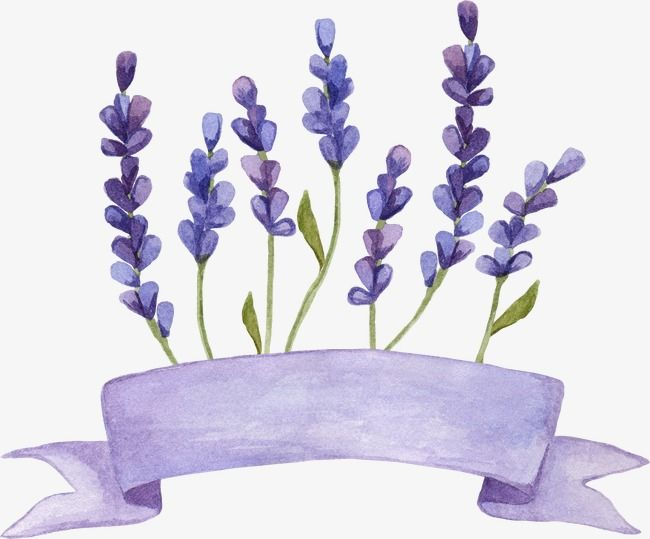 Lavender Flowers Watercolor Png Transparent Clipart Image And Psd File For Free Download Flower Graphic Design Flower Background Wallpaper Flower Graphic